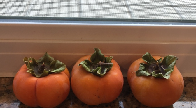 Fuyu persimmons on the counter
